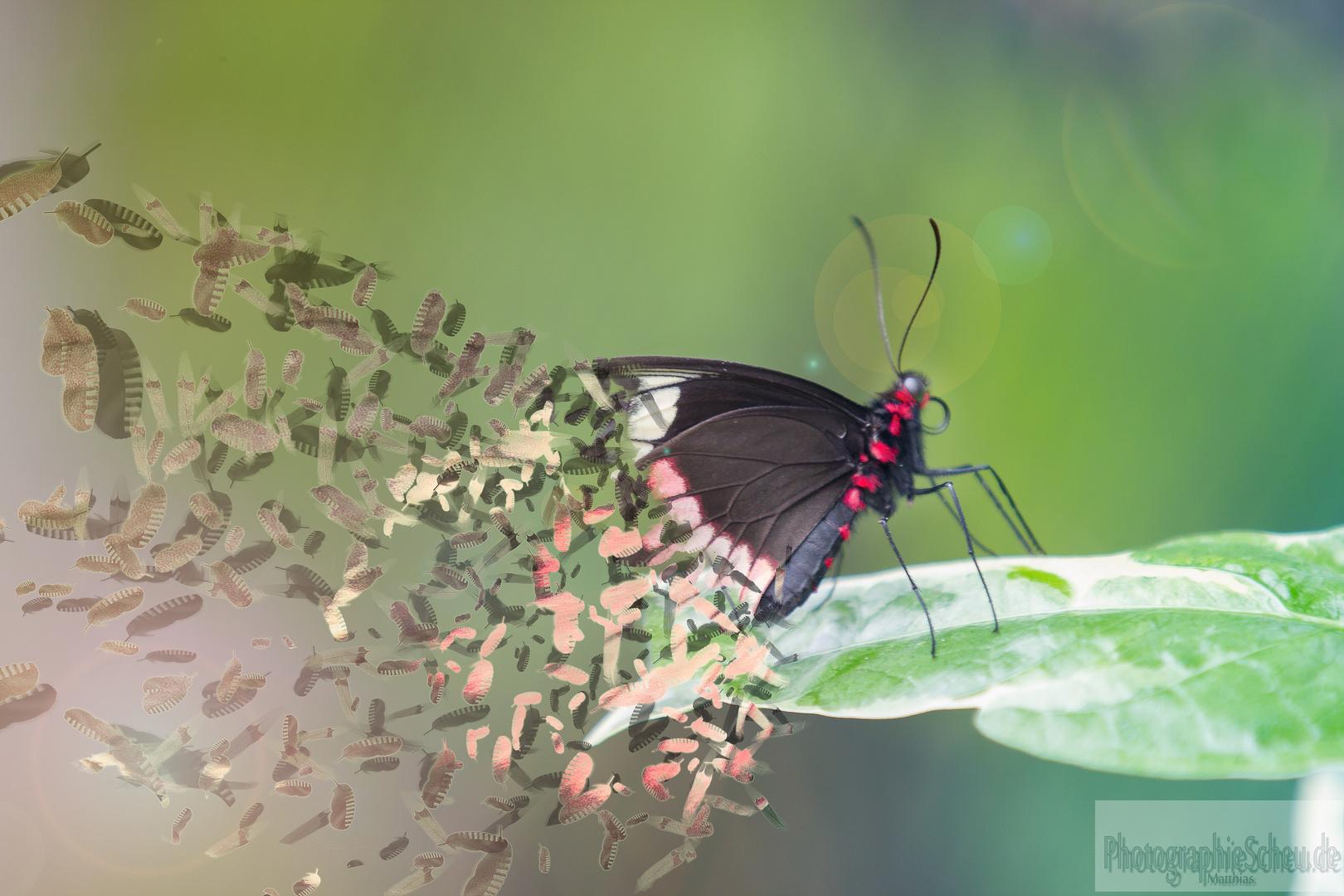 Butterflyeffekt