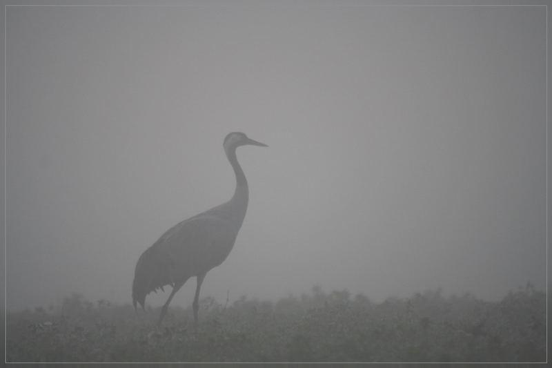by dawn's crane