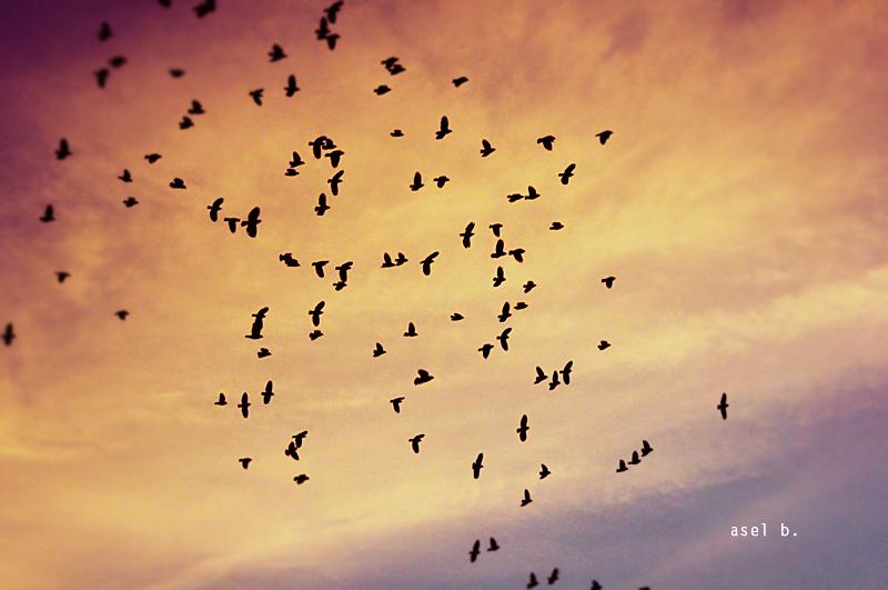 bye bye black bird
