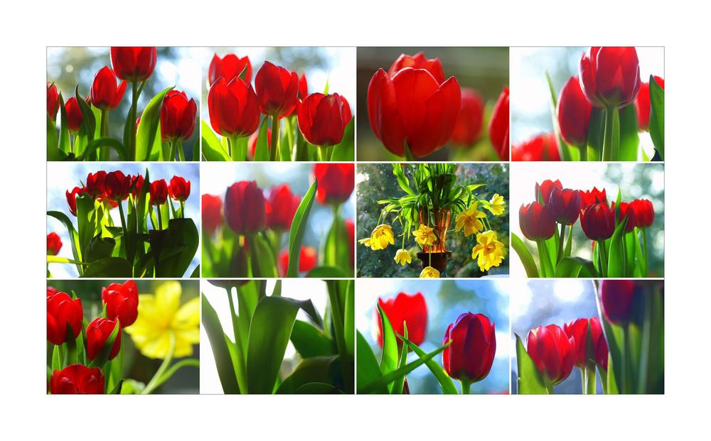 """C -  die blog-site """"Schön in den Frühling"""" aus user-Sicht -"""