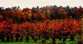 Herbst Impressionen rund um den Bodensee 18 by SINA