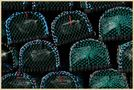 lobster pots on holy island by markkeville