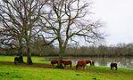 FR: Le poney landais.... von PERSYN Thérèse