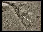 Cañas de retención de la arena