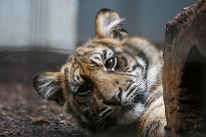 Animaux en captivité