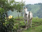 caballo y flor