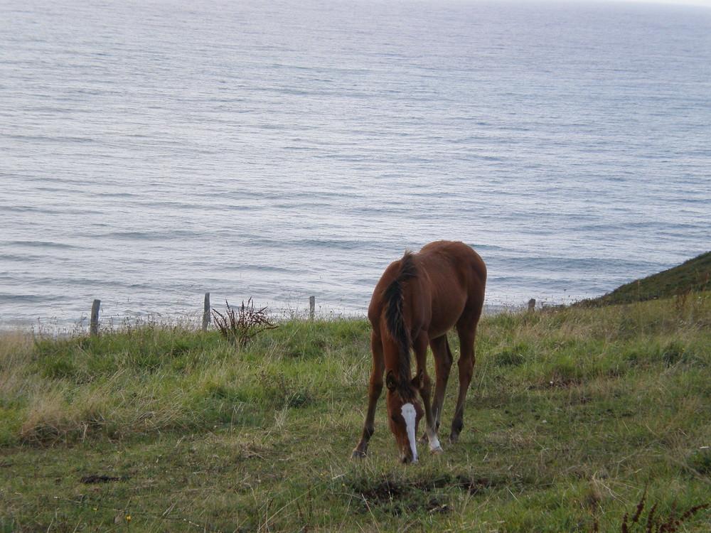 caballo.1
