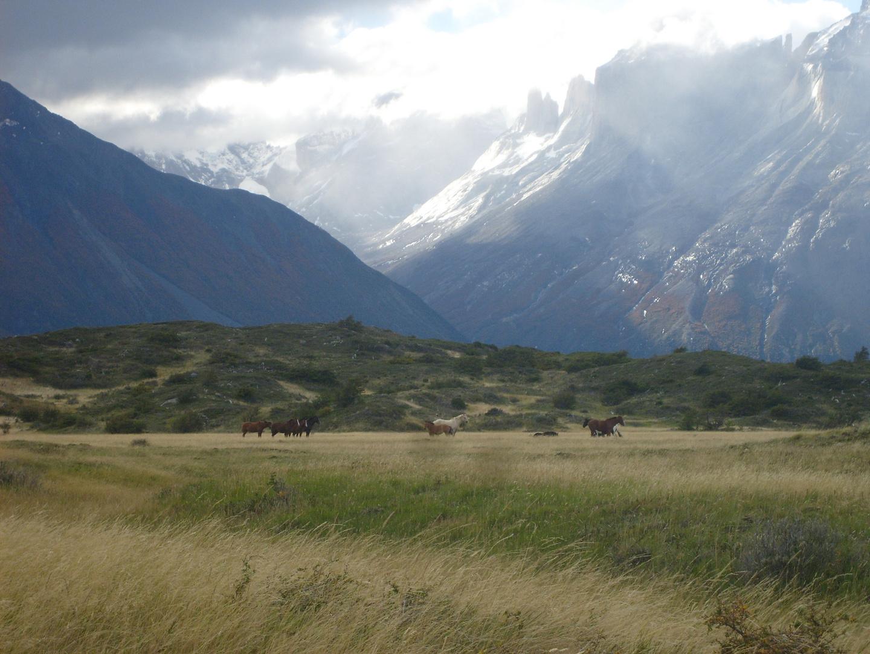 Caballos baguales en Torres del Paine - Chile