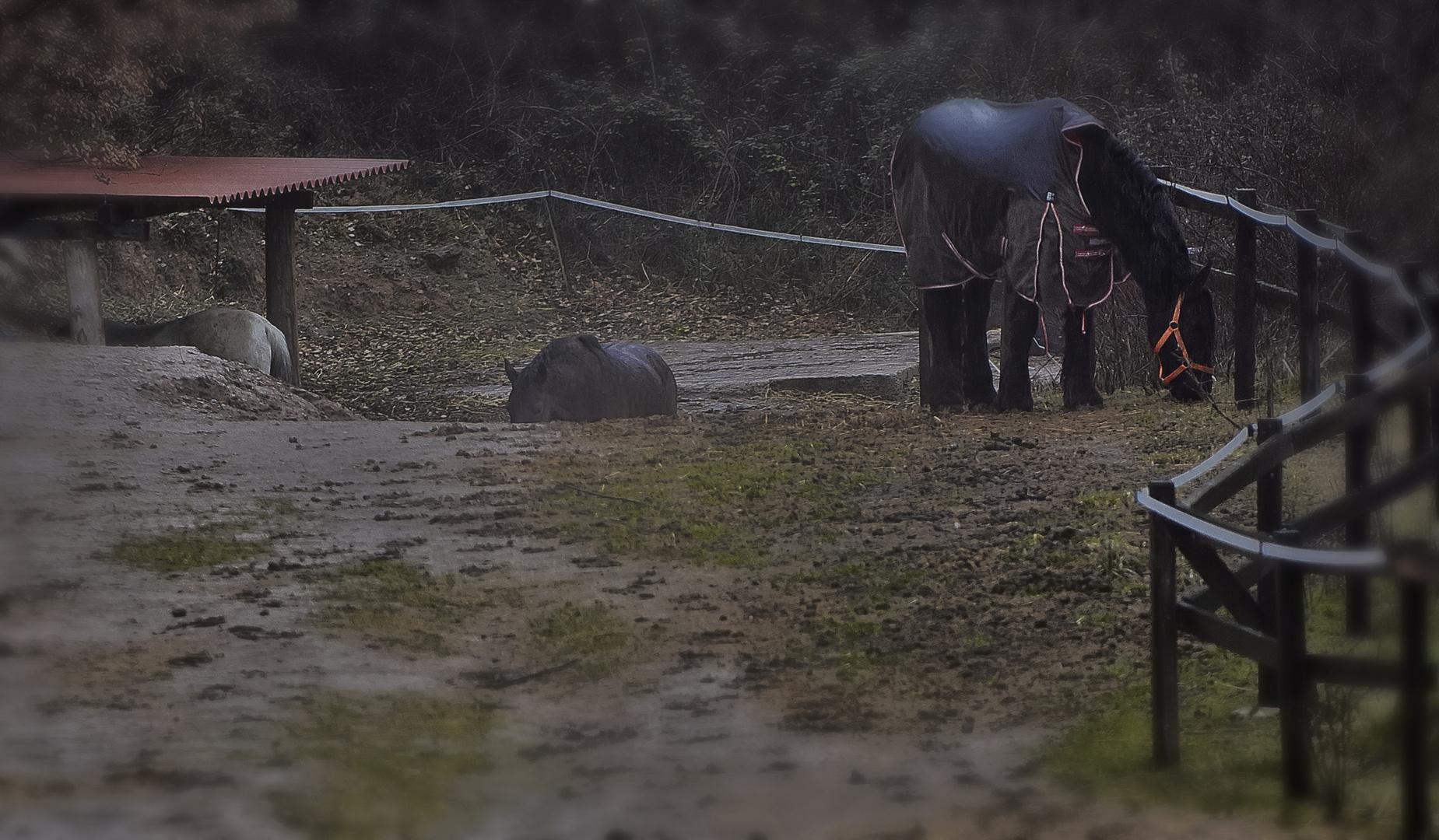 Caballos Bajo Lluvia