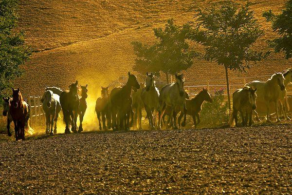 Caballos de La Almuzara (I)