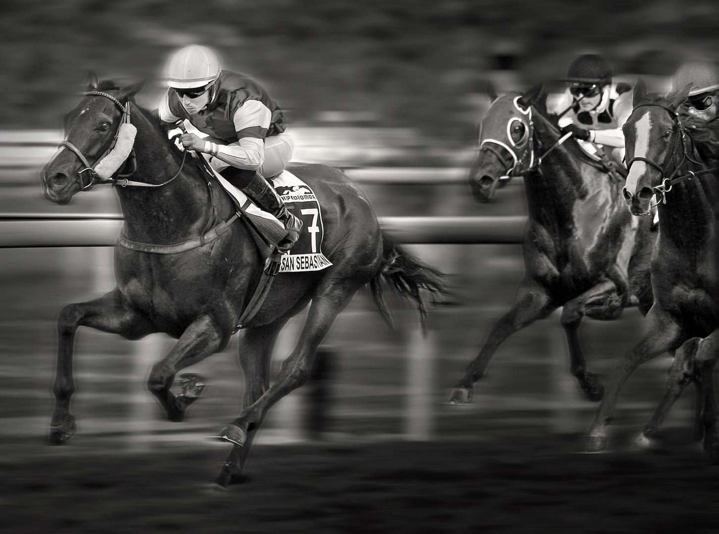 caballos en Donosti
