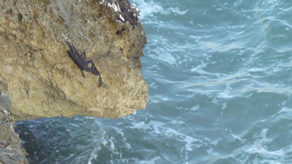 cabeza orca