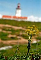 Cabo Espichel - Leuchtturm