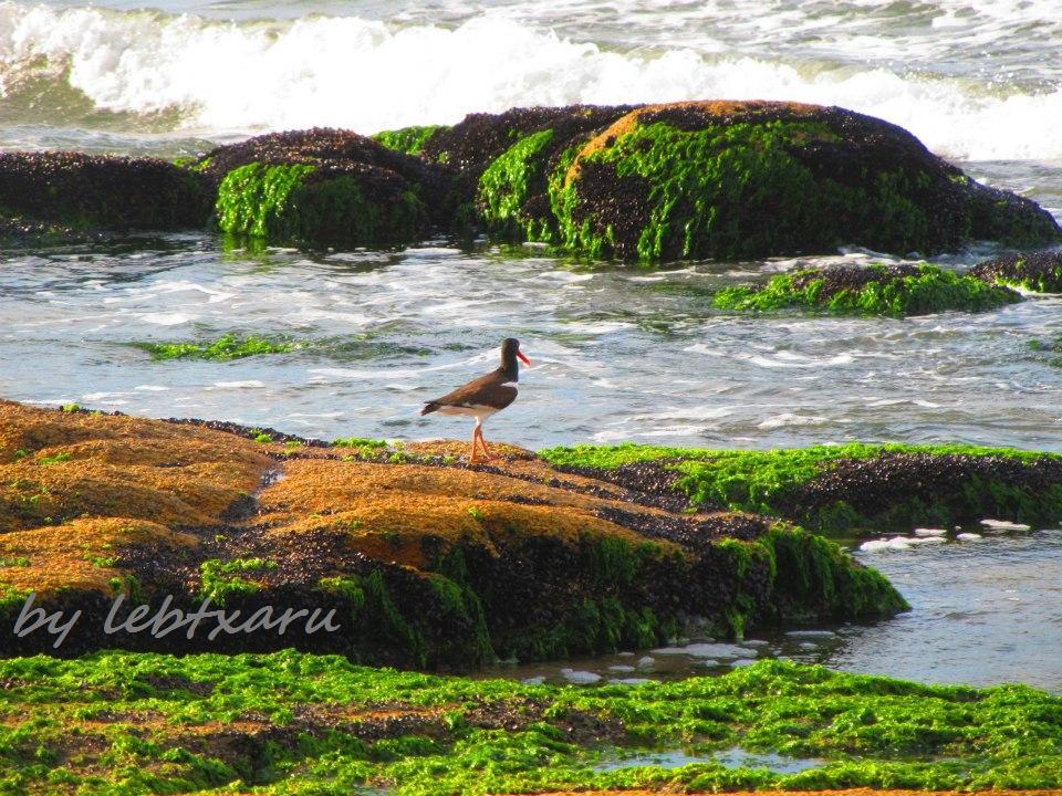 CABO POLONIO SEABIRD