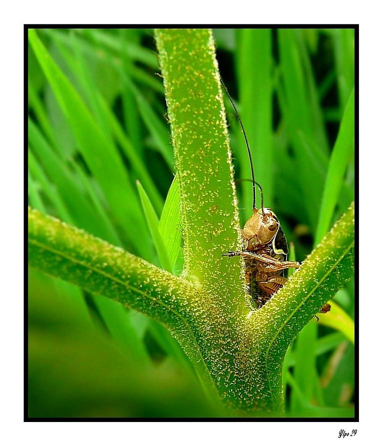 Cache-cache entre deux herbes