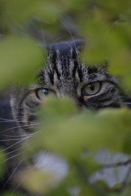 Cache-cache le chat