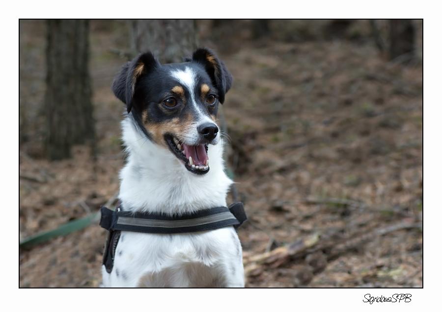 Cacher-Hund Fritzi