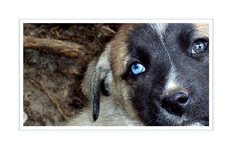 Cachorro * Puppy