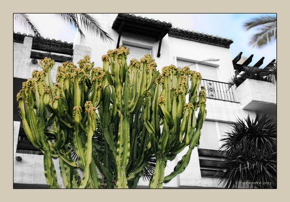 Cactus con guarnición arquitectónica