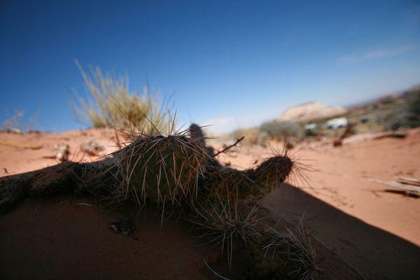 Cactus dans le désert américain