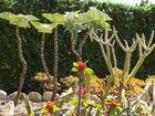 Cactus de Algar