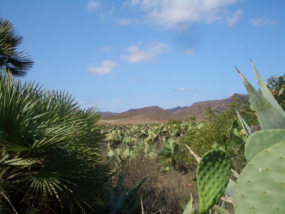 cactus et palmitos