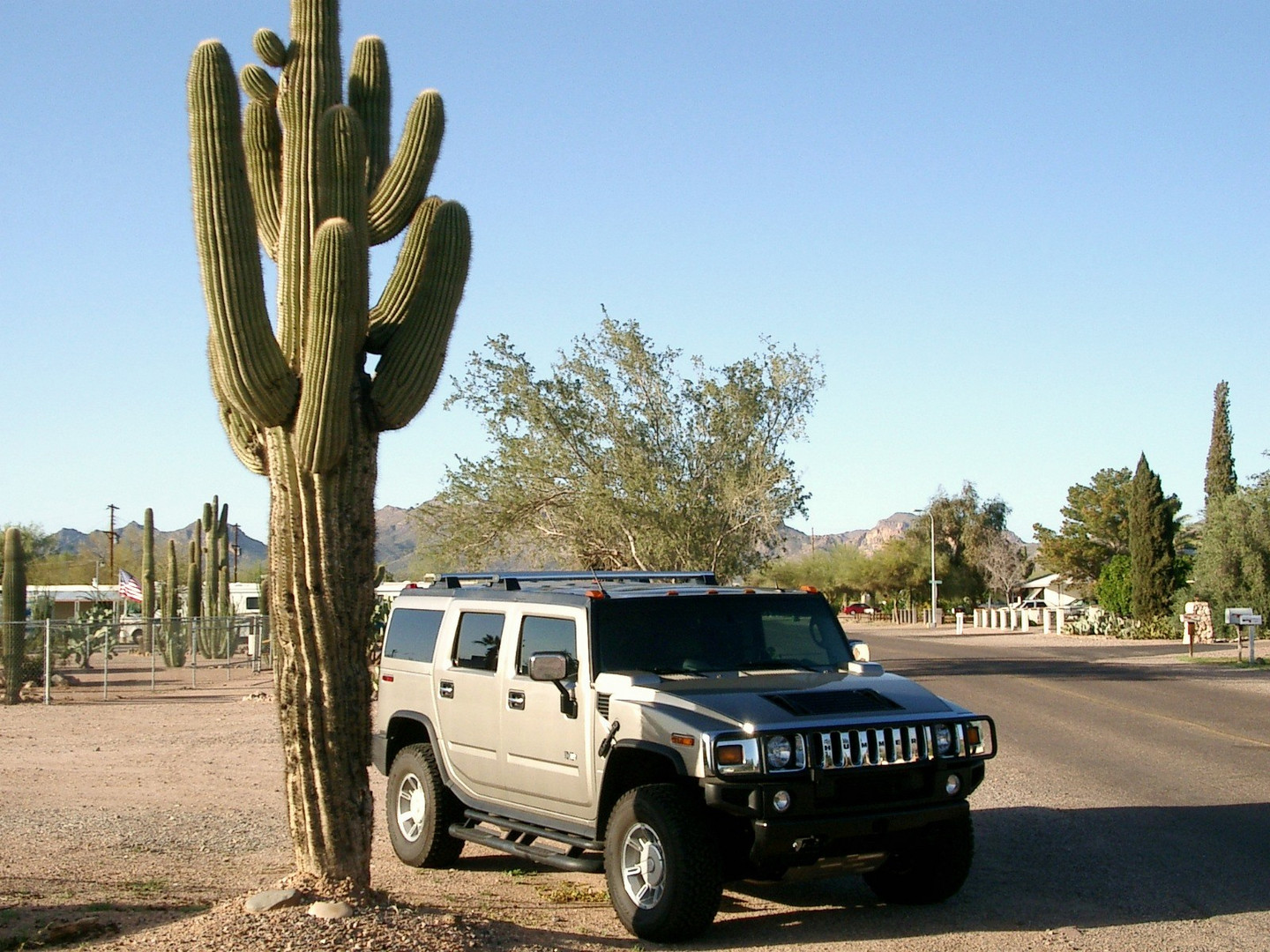Cactus & Hummer