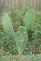 cactus rigolo