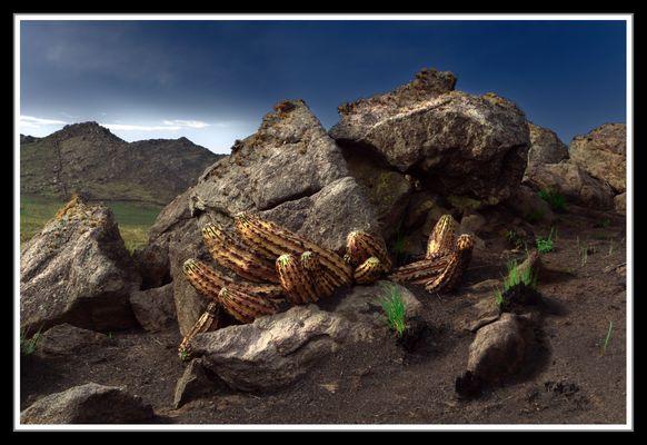 cactus y rocas