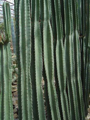 cactusworld