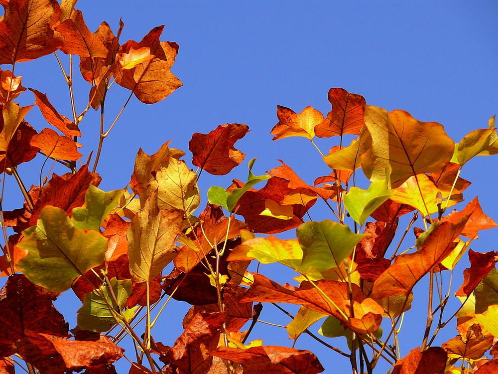 cadeau d'automne