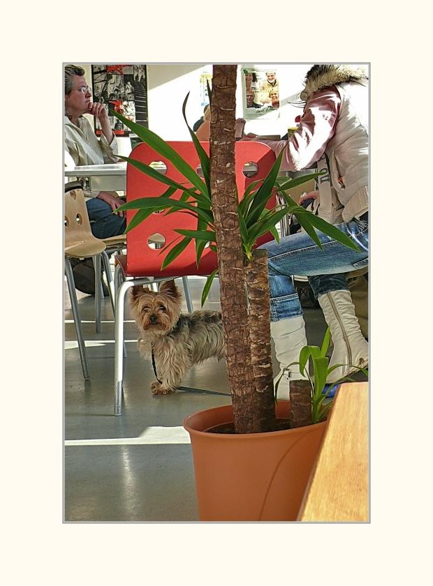 Café Döpps - 'the art of waiting under a chair' - (Wuppertal Elberfeld - Platte)