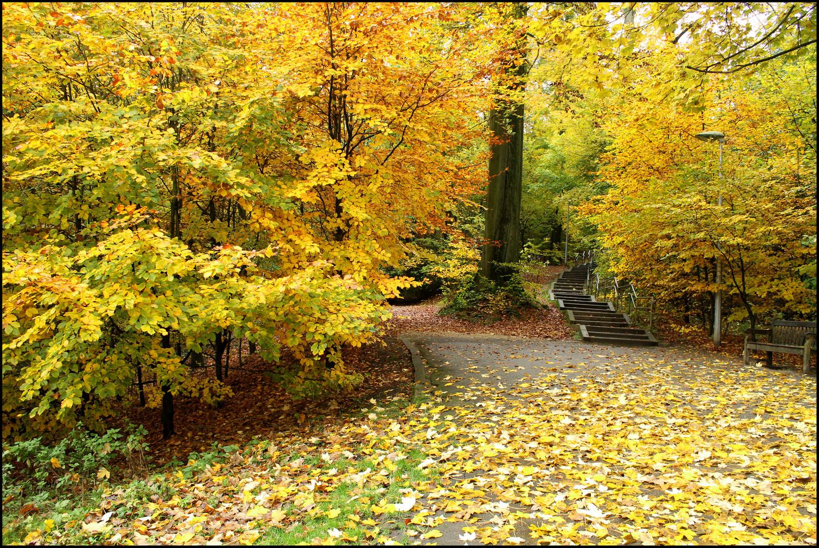 Caidas de hojas