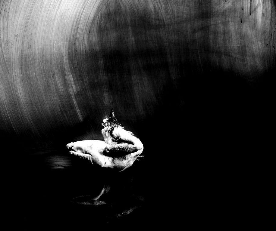 caille dans le noir