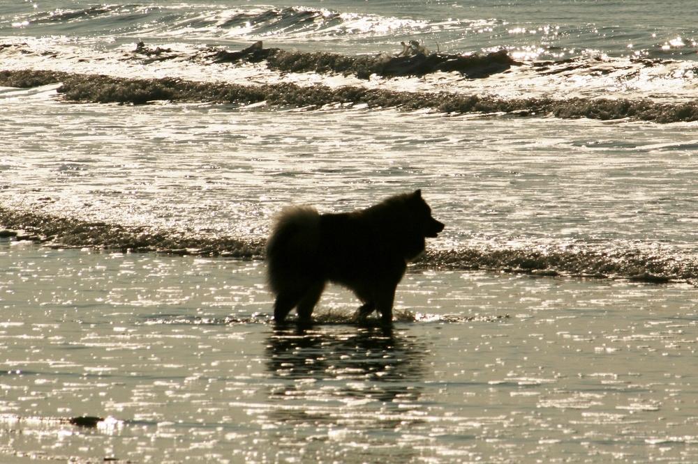 Caius am Strand von Noordwijk (6)