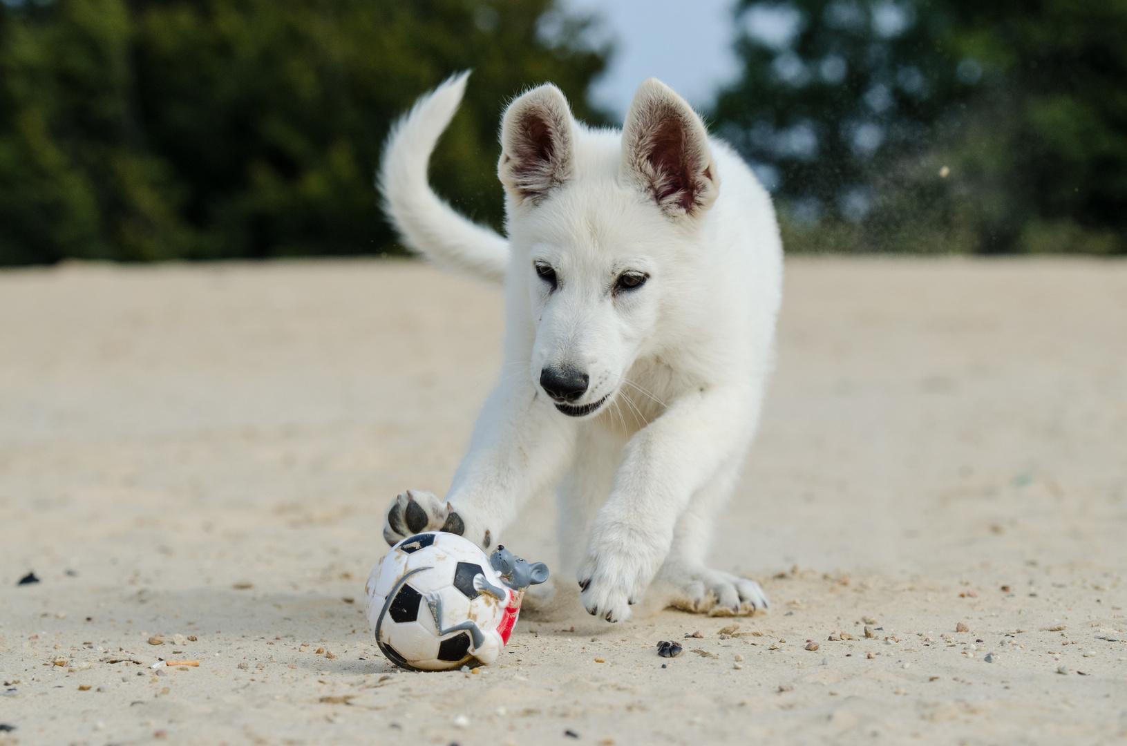 Cajun mit seinem Lieblingsball