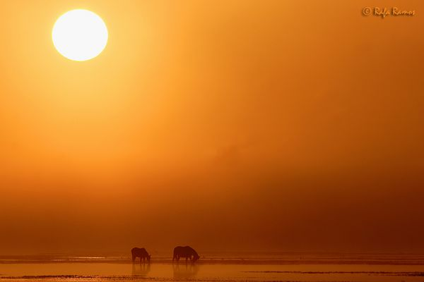 Cálido amanecer (para Alejandra Terranova)