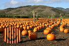 California Pumpkin