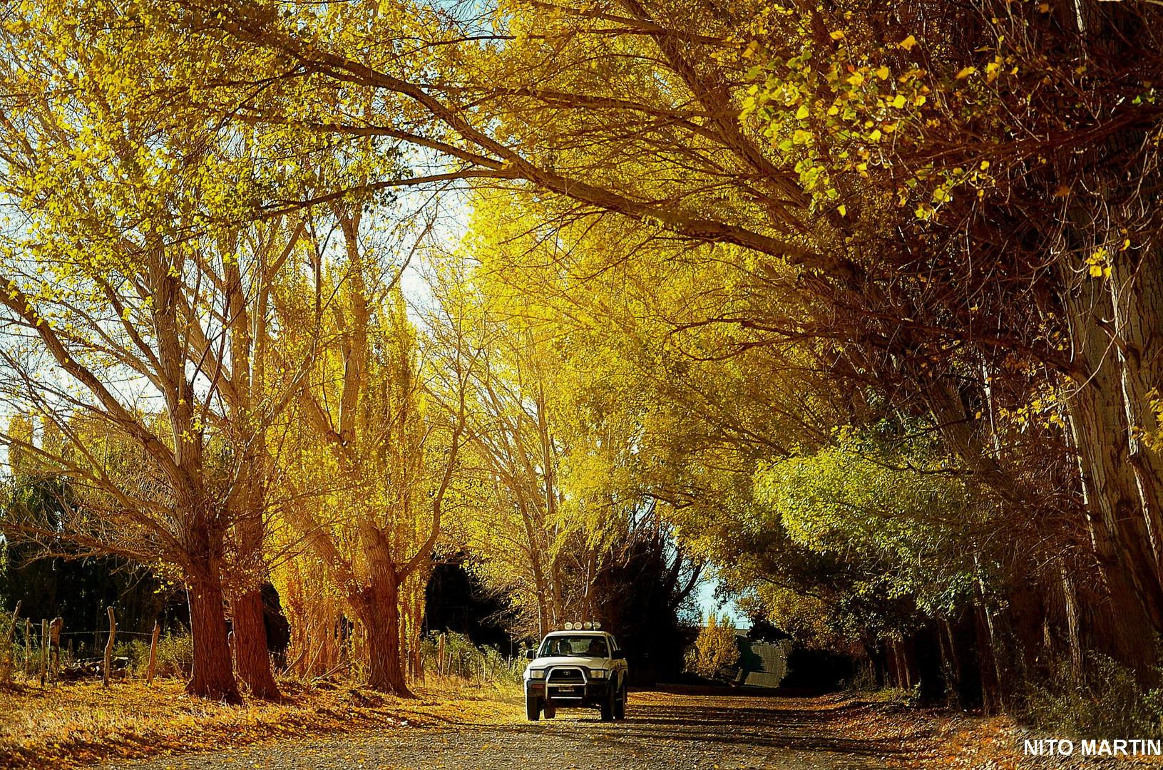 Calle Dorada .