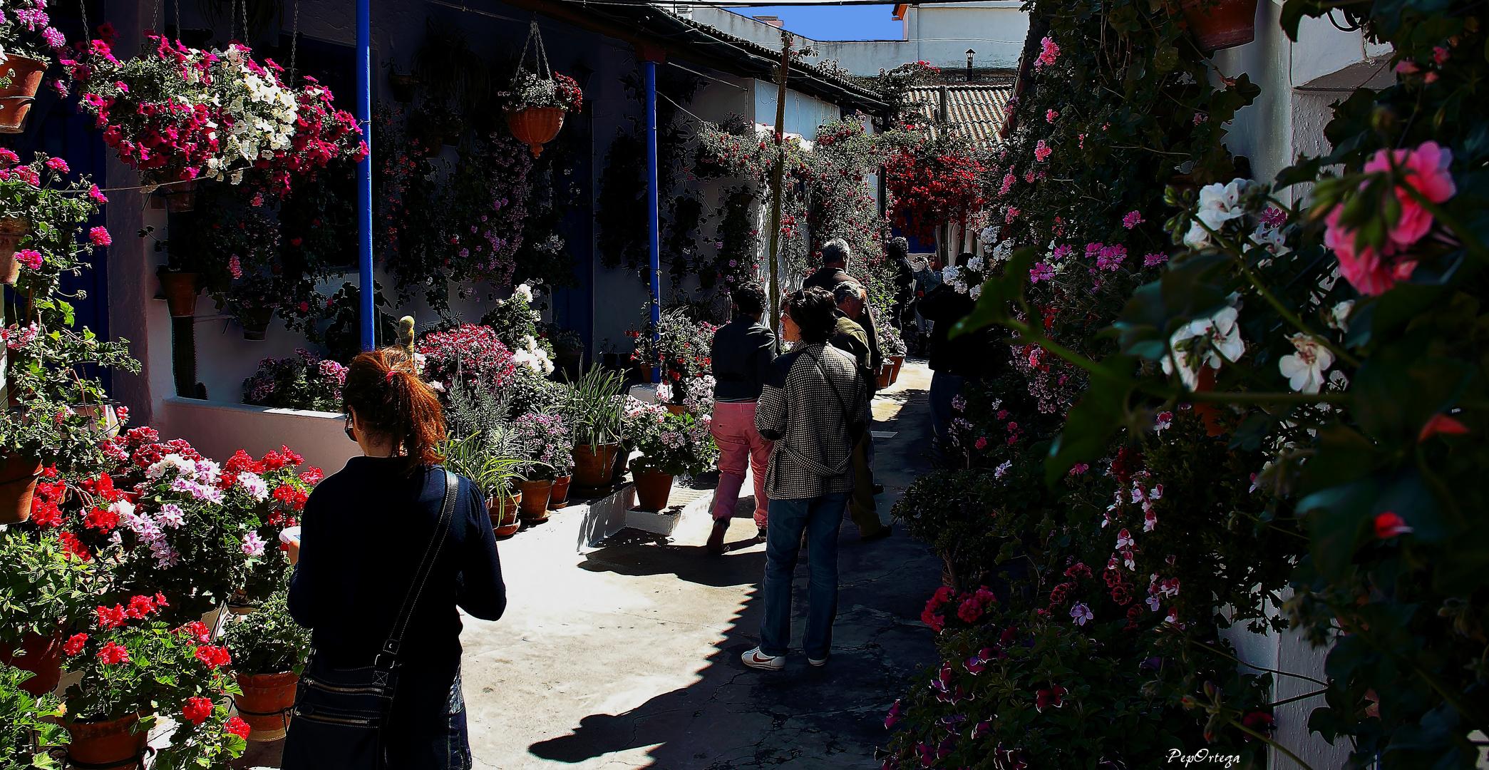 Calle Marroquíes
