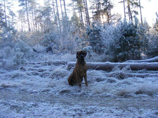 Calli im Winterwald