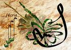 calligraphie et plante