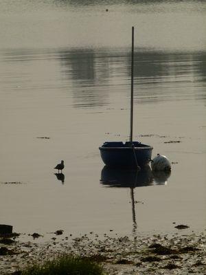 calme matin en bord de mer