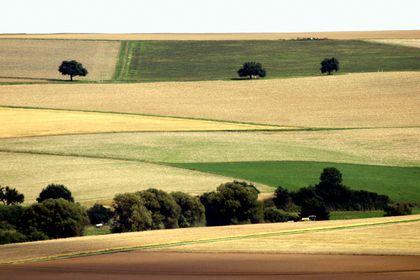Sommerliche Landschaft