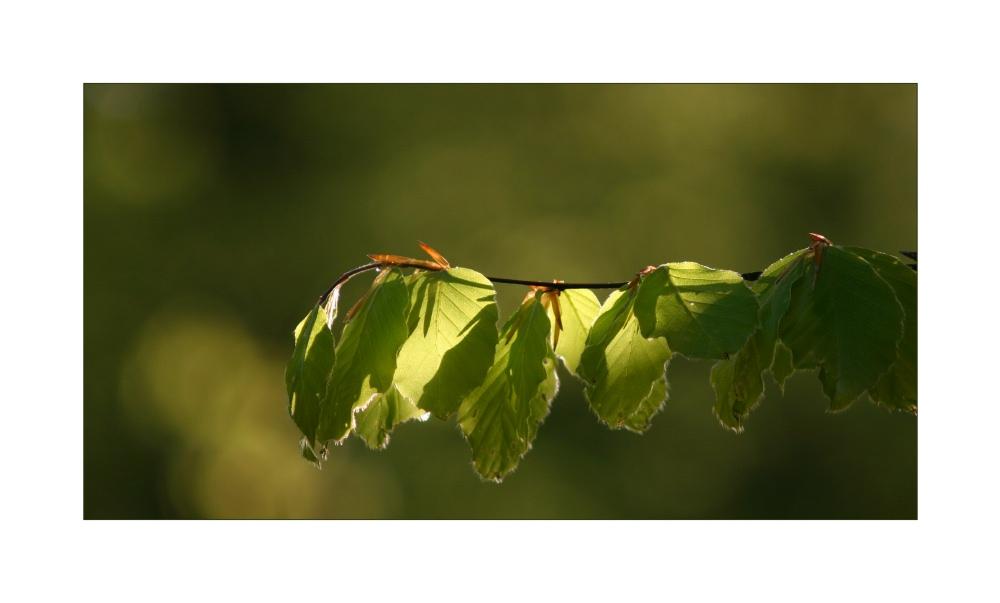 Camaïeu de vert