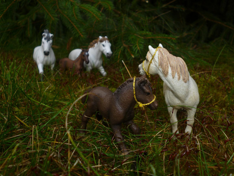 """""""Camargue Pferde"""""""