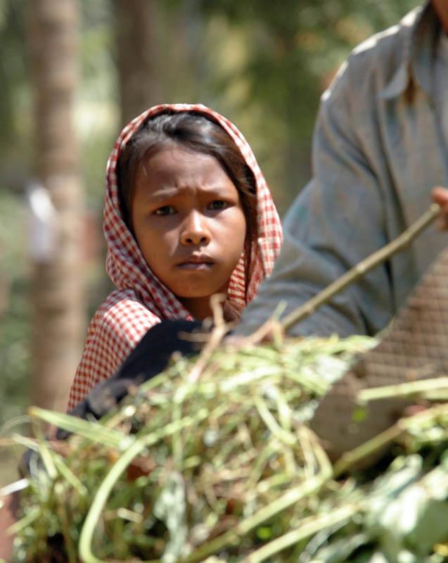 Cambodge 2006 chemin de campagne sur une remorque de paille