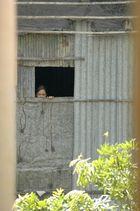 Cambodge 2006 Curieuse.