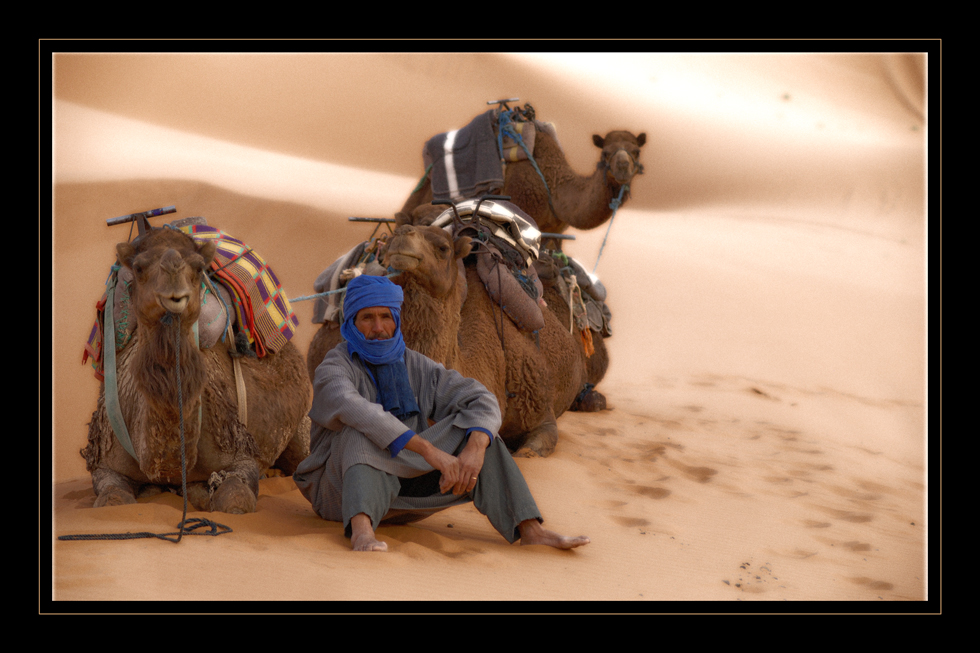 - Camel -
