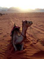 >> camel rally <<